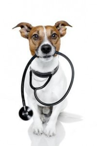 vet-tech-specialties